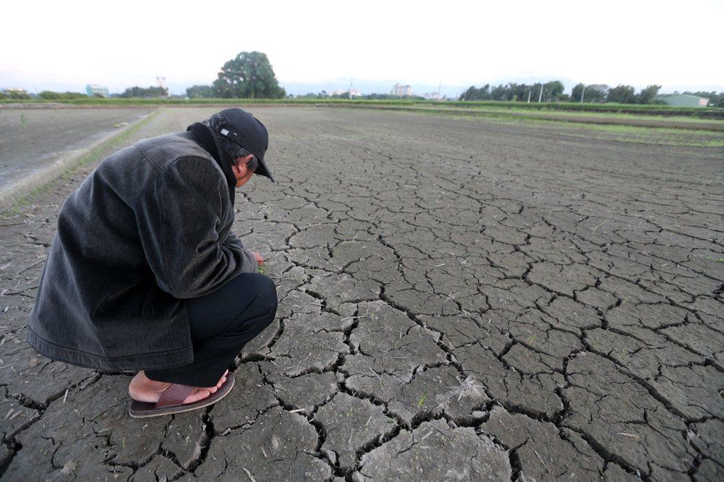 水情吃緊,桃竹苗部分二期稻作將停止供灌。桃園一位農民看著已休耕的稻田,希望缺水狀...