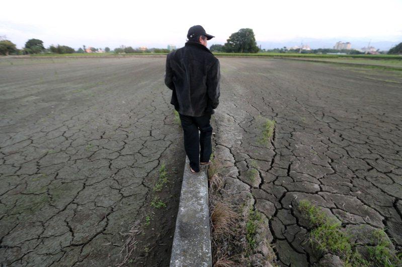 水情吃緊,桃竹苗部分二期稻作將停止供灌。桃園一位農民看著已休耕的稻田,希望缺水狀況能獲紓解。記者胡經周/攝影