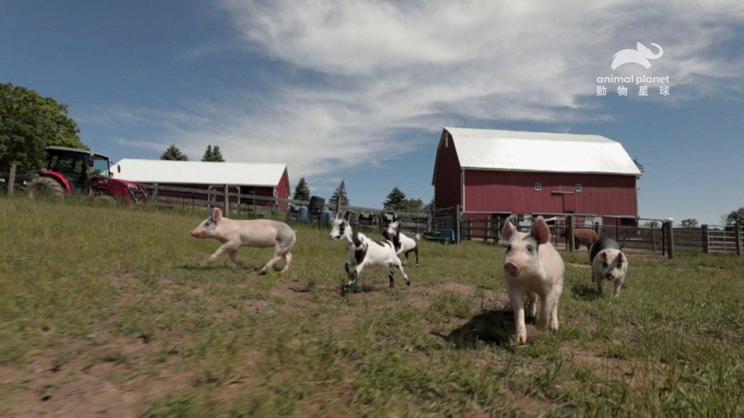 動物們在庇護所開心生活。圖/動物星球頻道提供