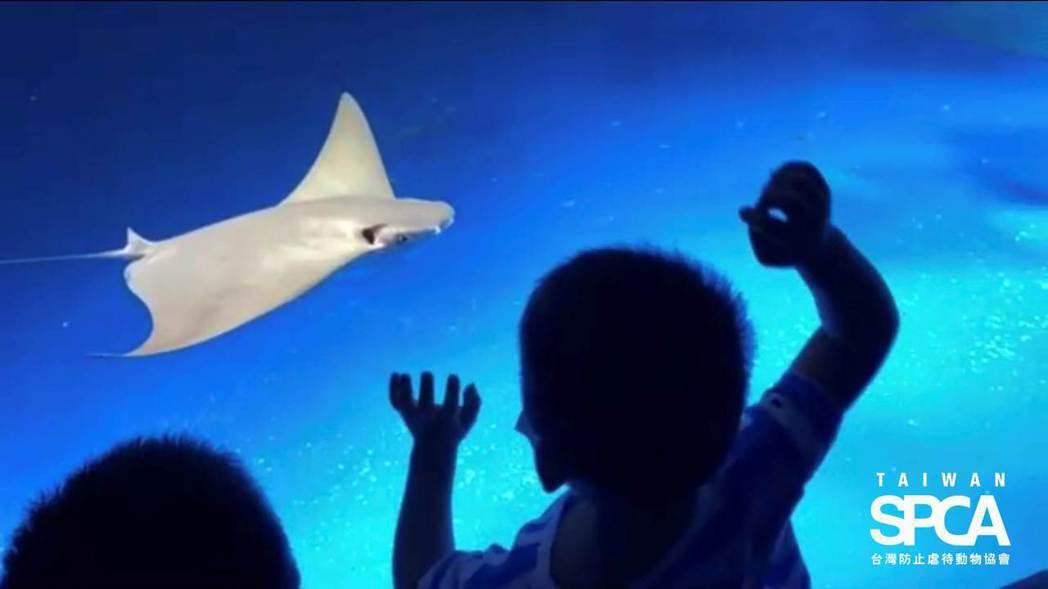 小孩對著迎面游來的燕魟拍打玻璃。台灣防止虐待動物協會提供。