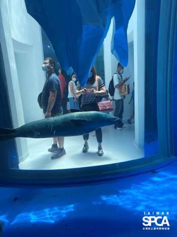斑海豹的甜甜圈型展示缸。台灣防止虐待動物協會提供。