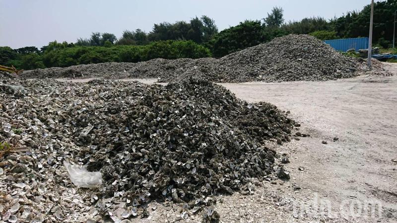 牡蠣養殖創造漁業經濟,蚵殼也可做其他用途,增加收入。記者鄭惠仁/攝影