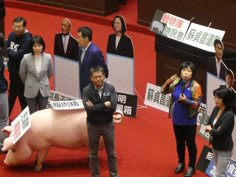 蔡政府開放含瘦肉精美豬進口引發民意反彈,藍營內湧現倒閣聲音。記者周志豪/攝影