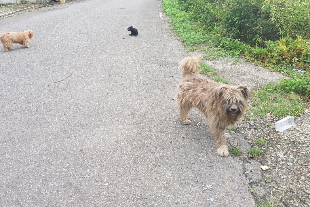 梗犬被棄成移動拖把 遇動保協會變身萌犬獲認養