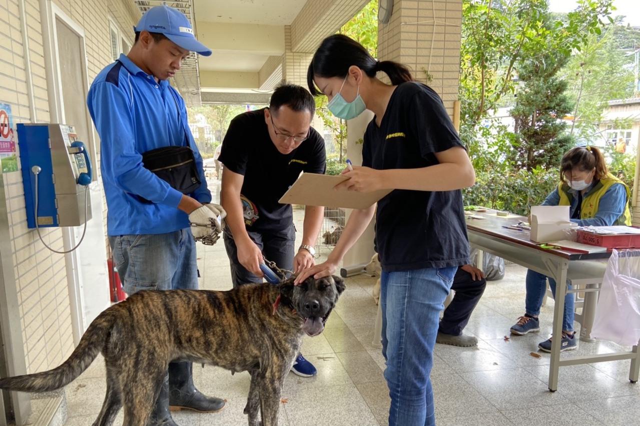中市動保處到梨山助犬貓絕育 6天完成130隻犬貓