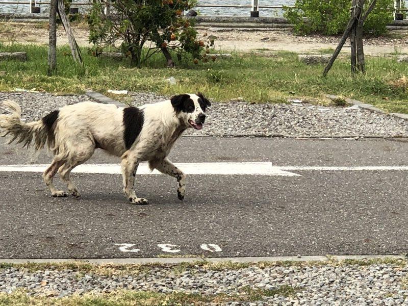 在路上遇到有敵意的狗狗時,專家提醒,停下所有動作、眼神不要直視牠、不要拿東西攻擊或大聲尖叫、叱責,在牠敵意降低時,再緩步反方向離開。記者邵心杰/攝影