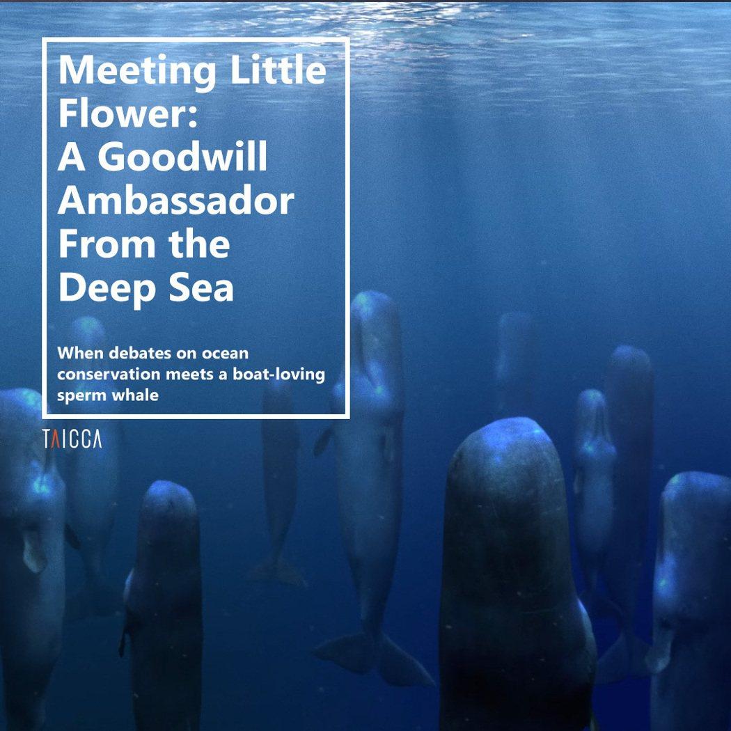 動畫廣告:遇見花小香:來自深海的親善大使。 文策院/提供