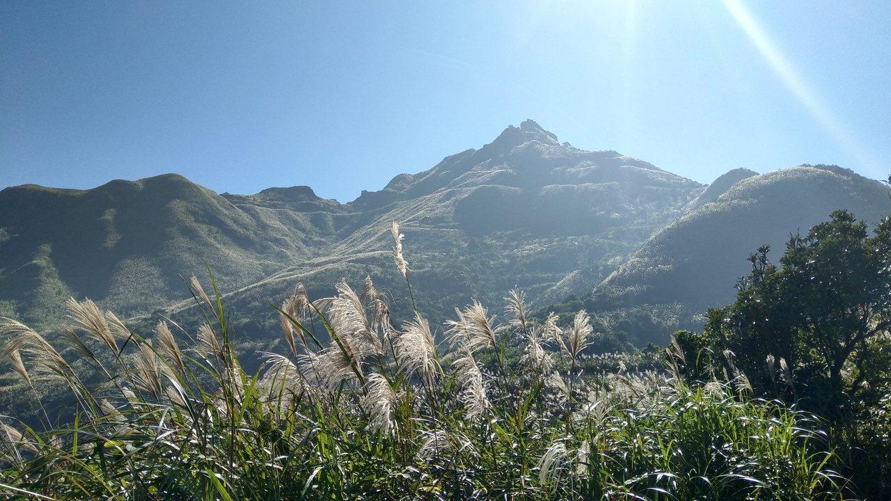 金瓜石浪漫公路觀景台芒花景致。 圖/周欽鎮 提供