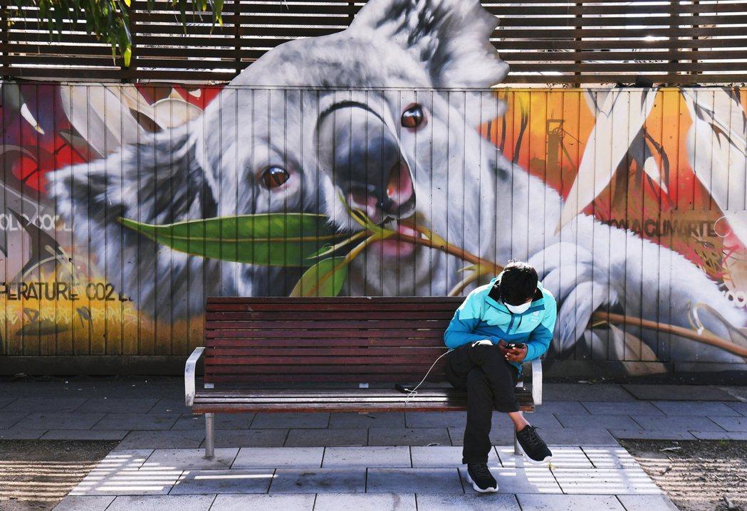 澳洲象徵的無尾熊因2019-2020野火大量死亡,澳洲官方今年也警示:未來在極端...
