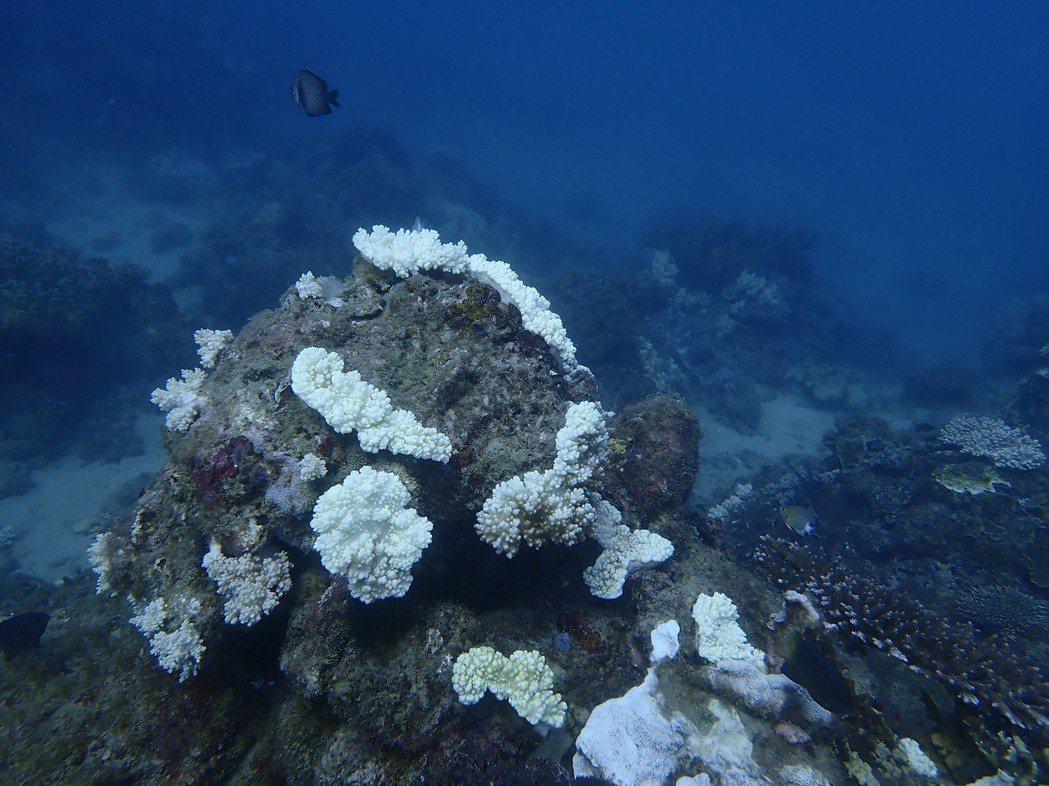 墾丁合界是潛水界的高階潛點,人為干擾較小,今年因海水溫度過高,出現十米以下珊瑚白...
