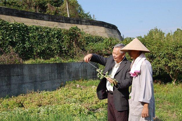 「左手香爺爺」自家買的農場,契作農戶手工除草栽種。 左手香爺爺/提供