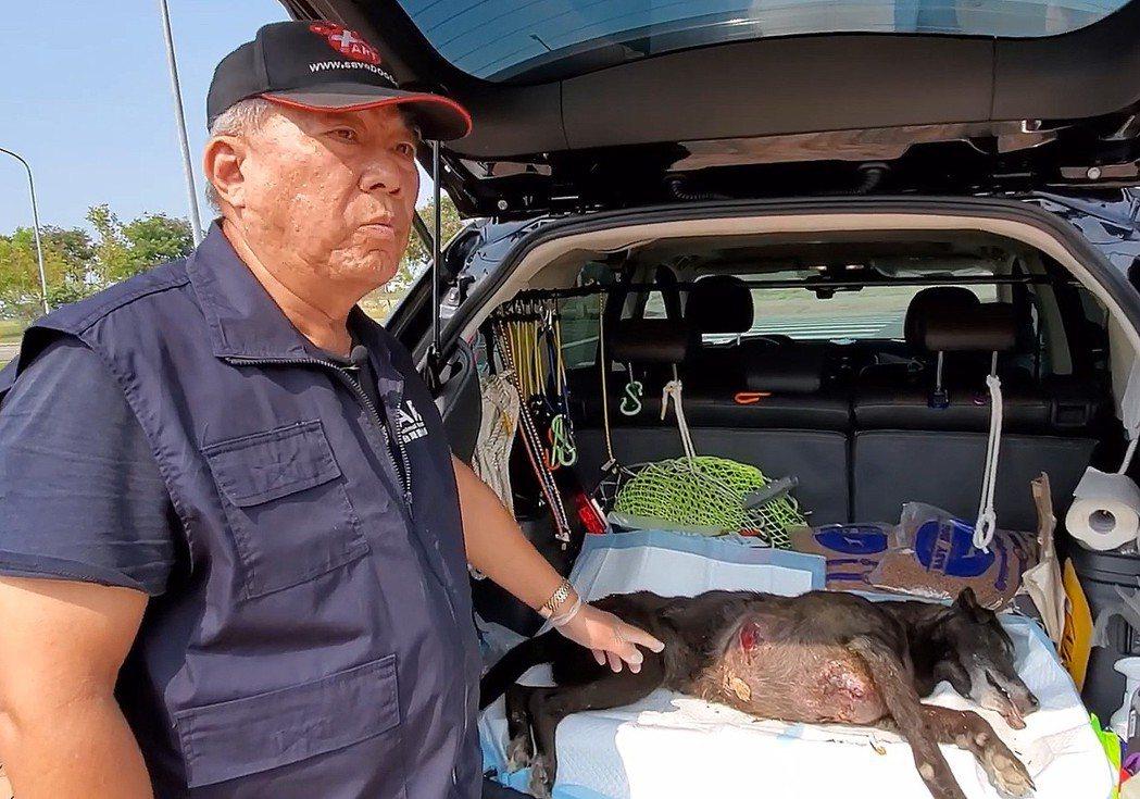 台灣動物緊急救援小組在高雄路竹救到一隻胸部垂掛巨大腫瘤的狗。記者王昭月/翻攝