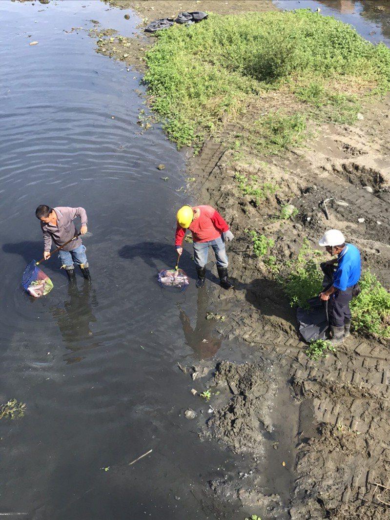 近幾天又有民眾反映出現死魚,從六家到縣治區周邊,自上周六起4天內,已經清運掉約2噸的死魚。圖/縣議員陳凱榮提供