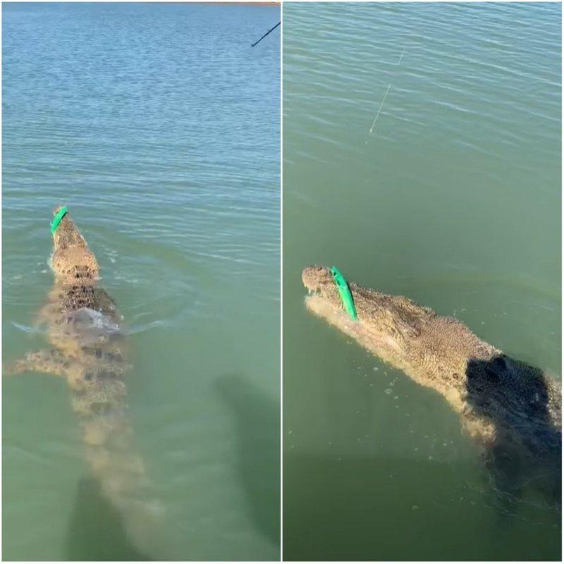 澳洲一名男子特倫德威斯12日前往澳洲北領地釣魚時,本以為是大魚上鉤,沒想到用力一拉,釣上來的竟然是隻巨大鱷魚。FACEBOOK/Rod and Rifle Tackleworld Katherine