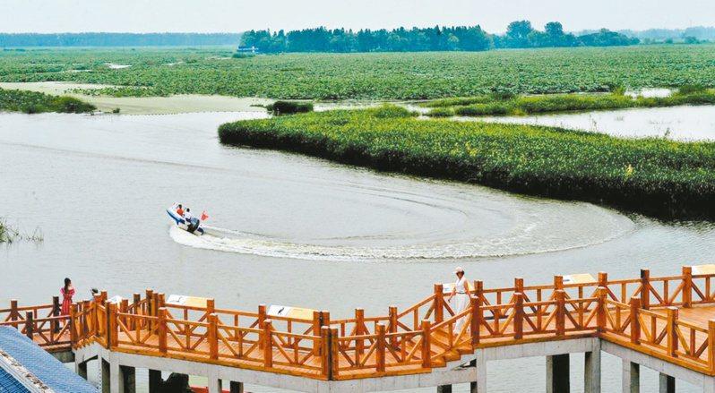 湖北返灣湖國家濕地公園,位於有「水鄉園林」美譽的潛江市,屬於古雲夢澤一角。圖/本報湖北潛江傳真