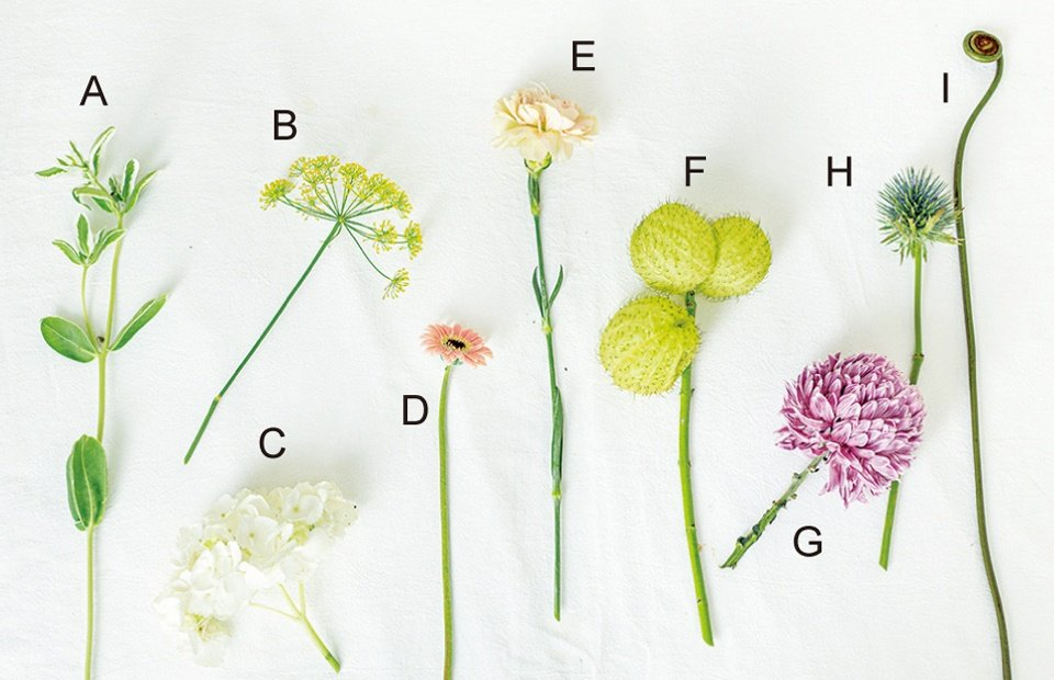 A 初雪草、B 茴香、C 繡球花、D 迷你太陽、E 康乃馨、F 唐棉、G 牡丹菊...