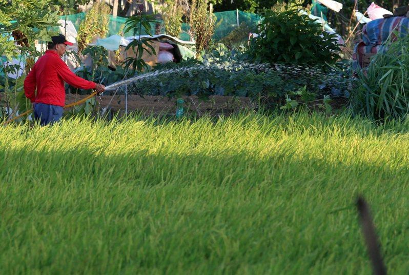 為了讓農民提早做好一期稻作的準備,王美花指出,會提前在今年11月底就討論明年初是否要農業限水。聯合報系資料照/記者胡經周攝影