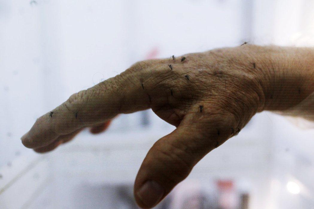 研究發現,許多蚊子都有與自己共生的沃爾巴克氏體,且假如兩隻同種蚊子,各有品系不同...