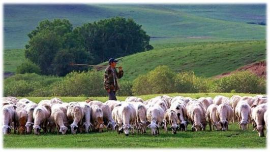 蒙古國贈送大陸的三萬隻羊首批四千隻已進入大陸。(百度)