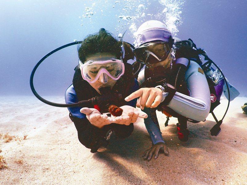 真的是海龜的便便!攝影/蘇淮