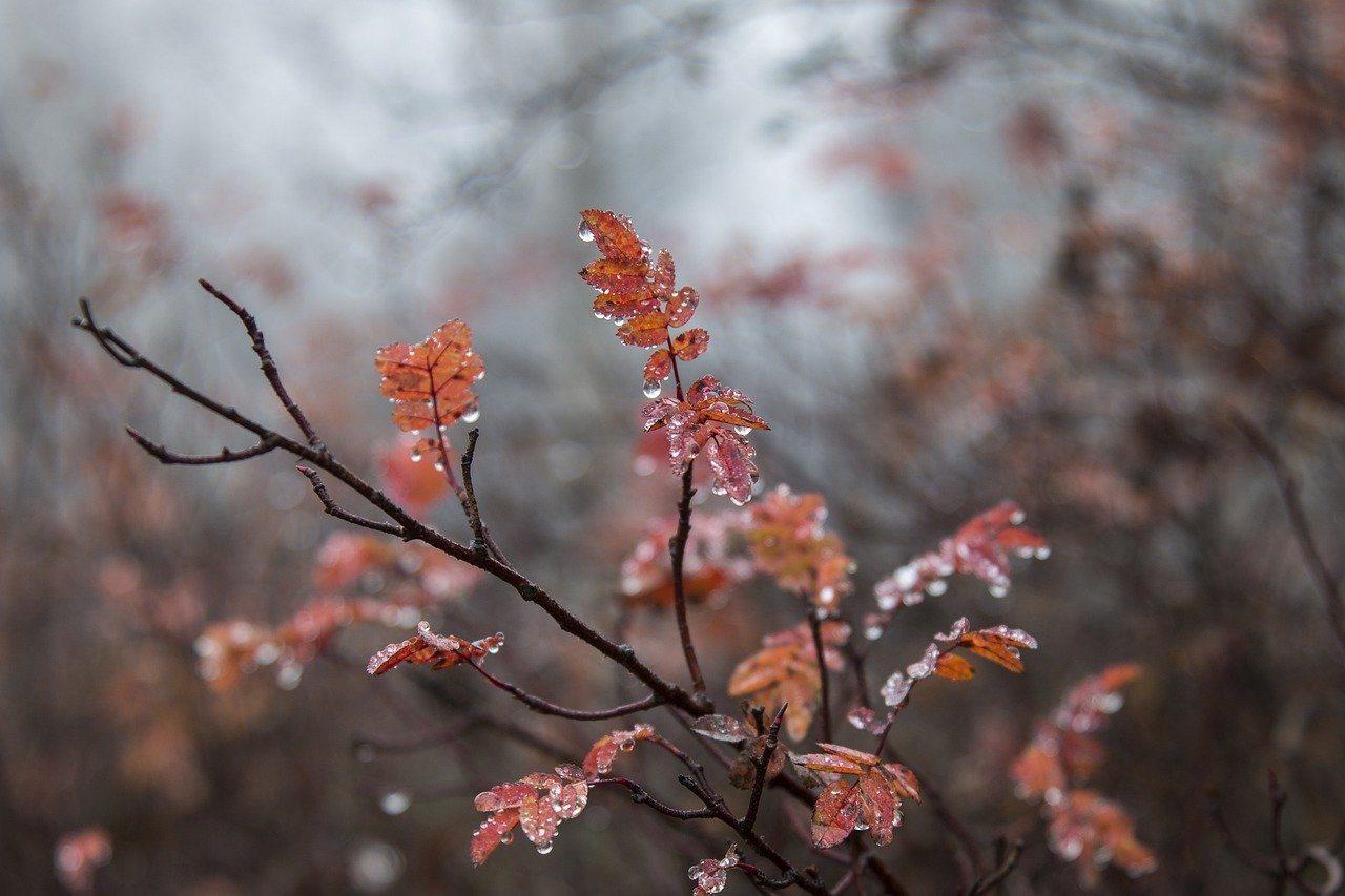 節氣正式進入「霜降」,為秋天的最後一個節氣,氣候步入初冬,夏天殘留的暑氣會在霜降...