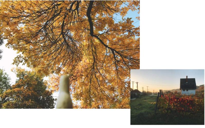 左圖:沿路都是大片的金黃葉子,非常美麗。右圖:清晨匈牙利的鄉村風景 (圖片來源:大塊文化)