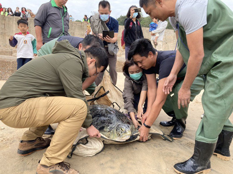 工作人員在岸巡的戒護下將綠蠵龜送到海邊,讓綠蠵龜重回大海的懷抱。記者蔡家蓁/攝影