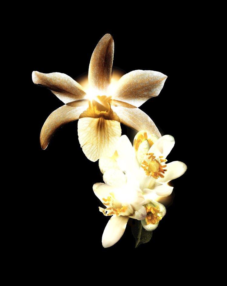 香奈兒奢華極萃能量肽金露,特別添加天然花卉複合激萃。圖/香奈兒提供