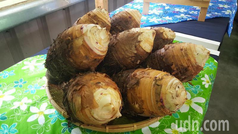 苗栗縣公館、銅鑼等地栽植的芋頭品質優良。記者胡蓬生/攝影