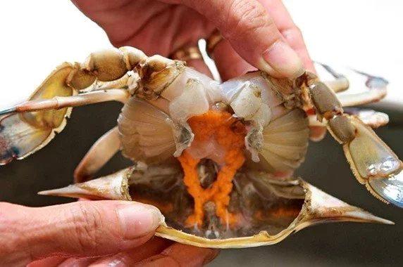 紅通通剛蒸好的萬里蟹,蟹黃飽滿。 圖/新北農業局提供