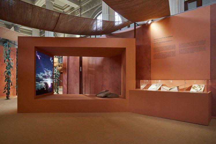 香奈兒日前於法國巴黎國家自然歷史博物館,舉辦「耕植美麗」展覽。圖/香奈兒提供