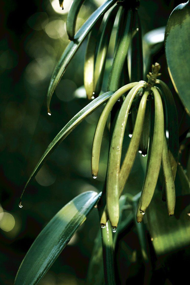 香奈兒堅持以永續、友善的方式,栽種培育植物。圖/香奈兒提供