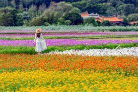 花都開好了!「2020桃園花彩節」繽紛花海媲美歐洲,楊梅彩虹花道好療癒