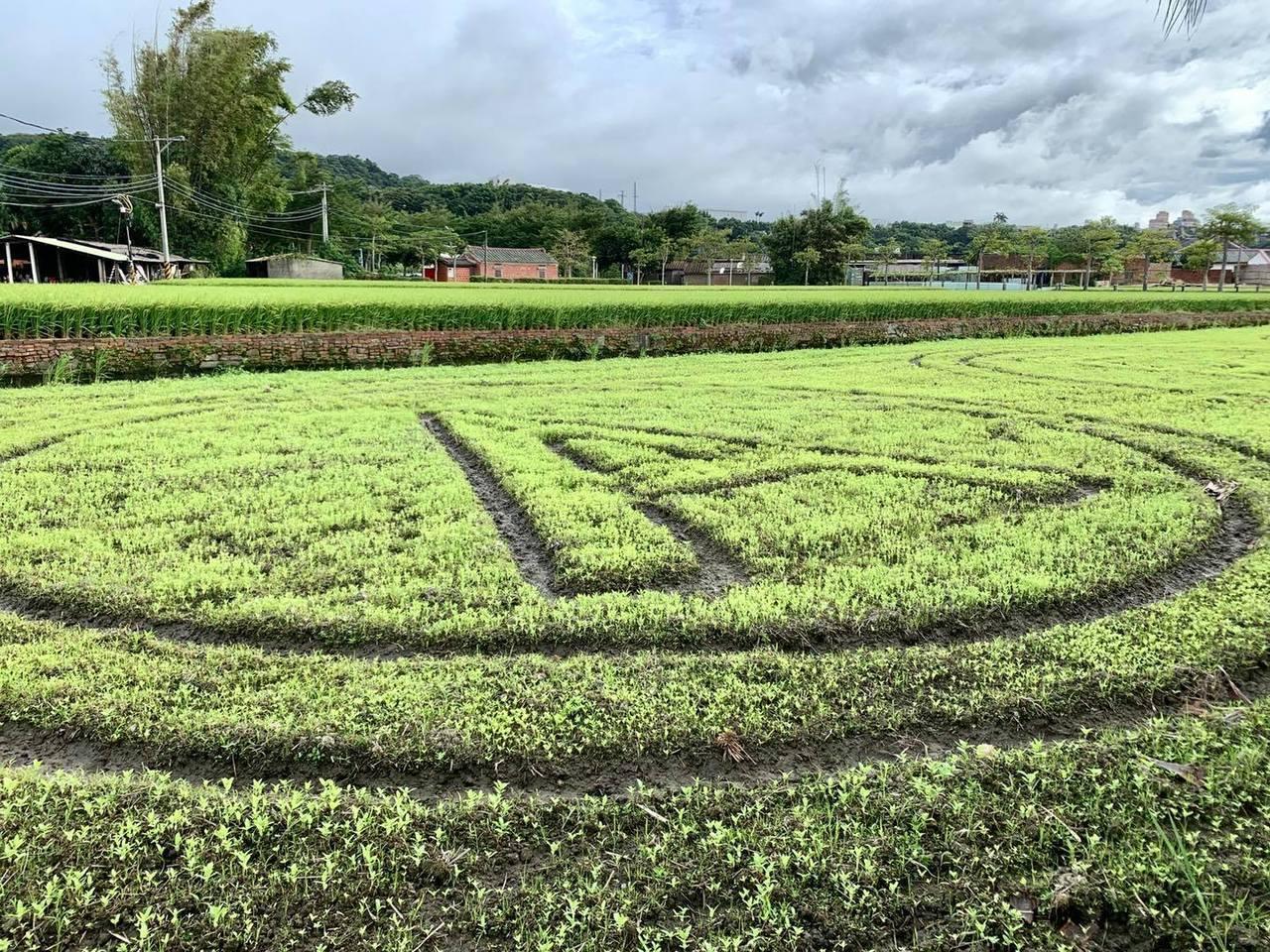 展期倒數三周,可愛的百日草跟波斯菊,也在努力生長中 圖/大溪月眉休閒農業發展協會...