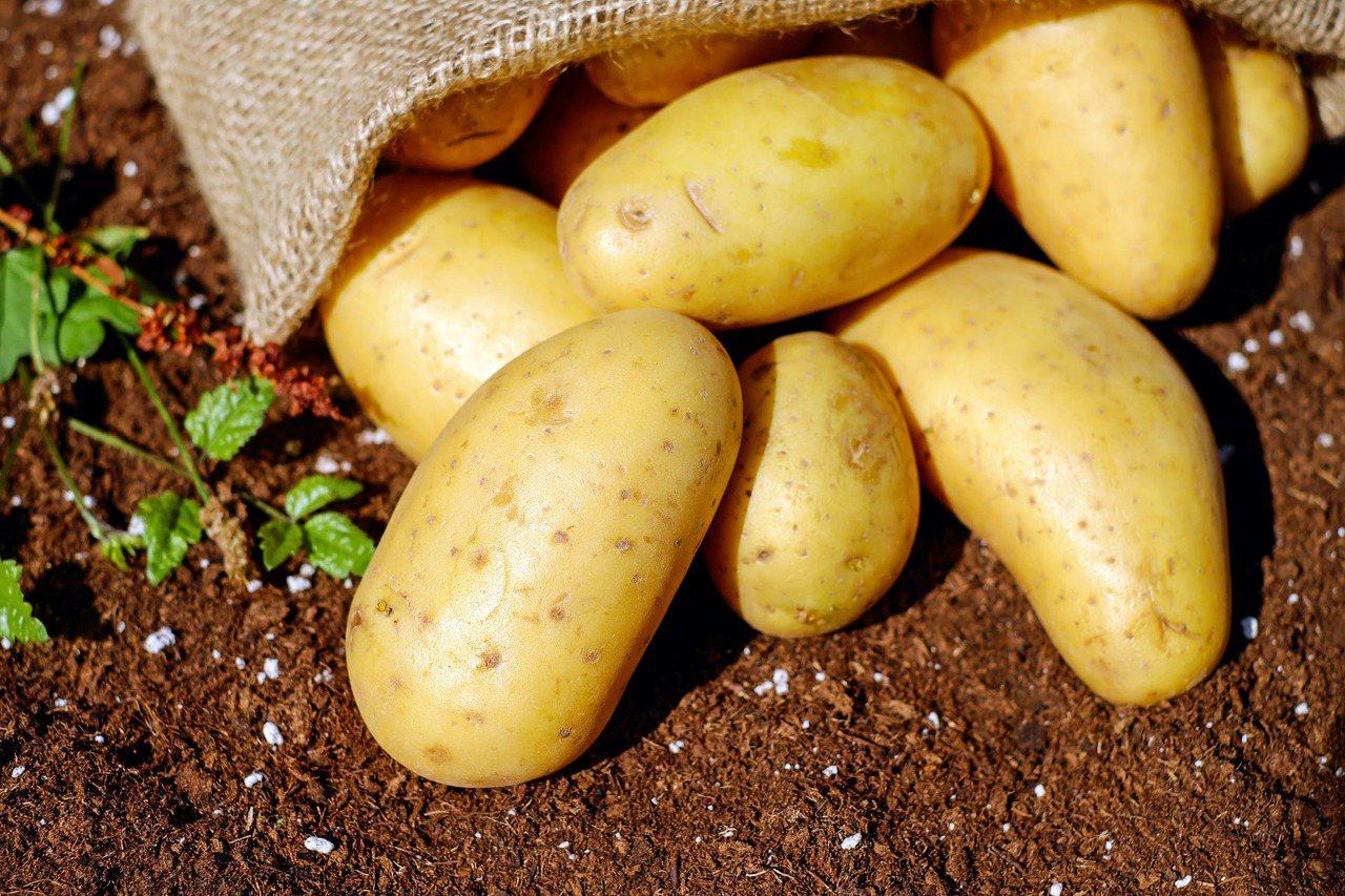 馬鈴薯富含維生素C (Vitamin C)讓T細胞和B細胞活躍起來。 圖/pex...