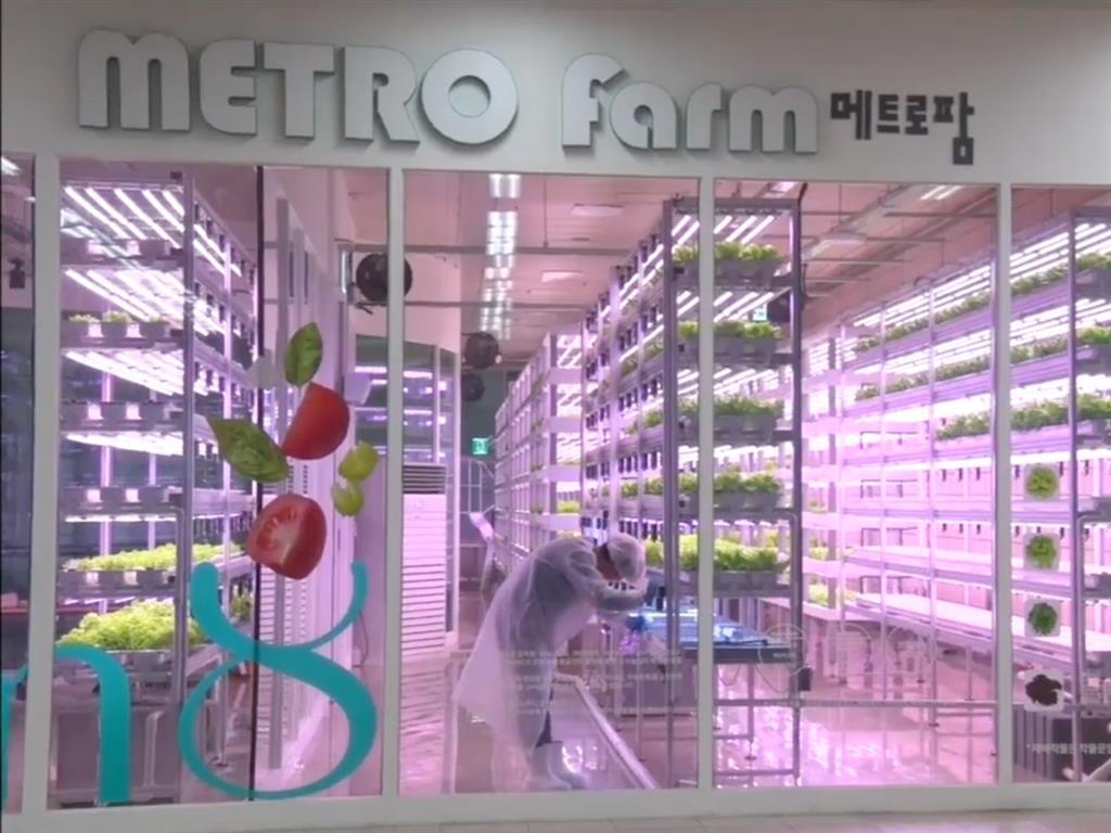 透過在城市底下設置科技化農場,不僅可減少運輸成本也可以把最新鮮的蔬菜送到餐桌上。...