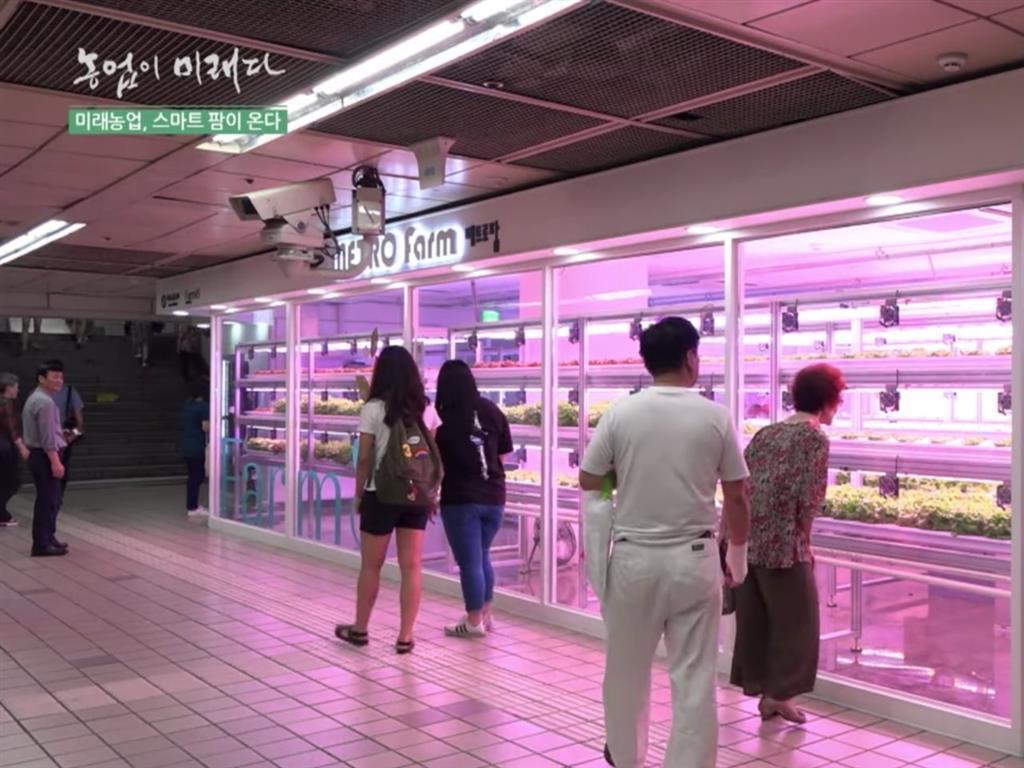 位於韓國首爾上島車站的Metro Farm 常有路人經過因好奇而駐足圍觀。 圖/...