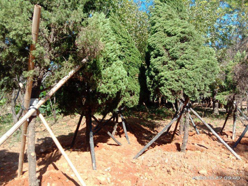 桃市府工務局表示,配合大湳森林公園景觀工程,會將公園部分樹木暫時移植至工區內空地,不過強調「會全數保留」。圖/工務局提供