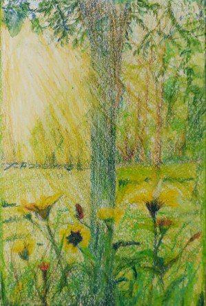 罹癌出院後,上班前先到公園走走,迎接早晨的陽光、花花草草,調劑身心。圖/葉智芬提...