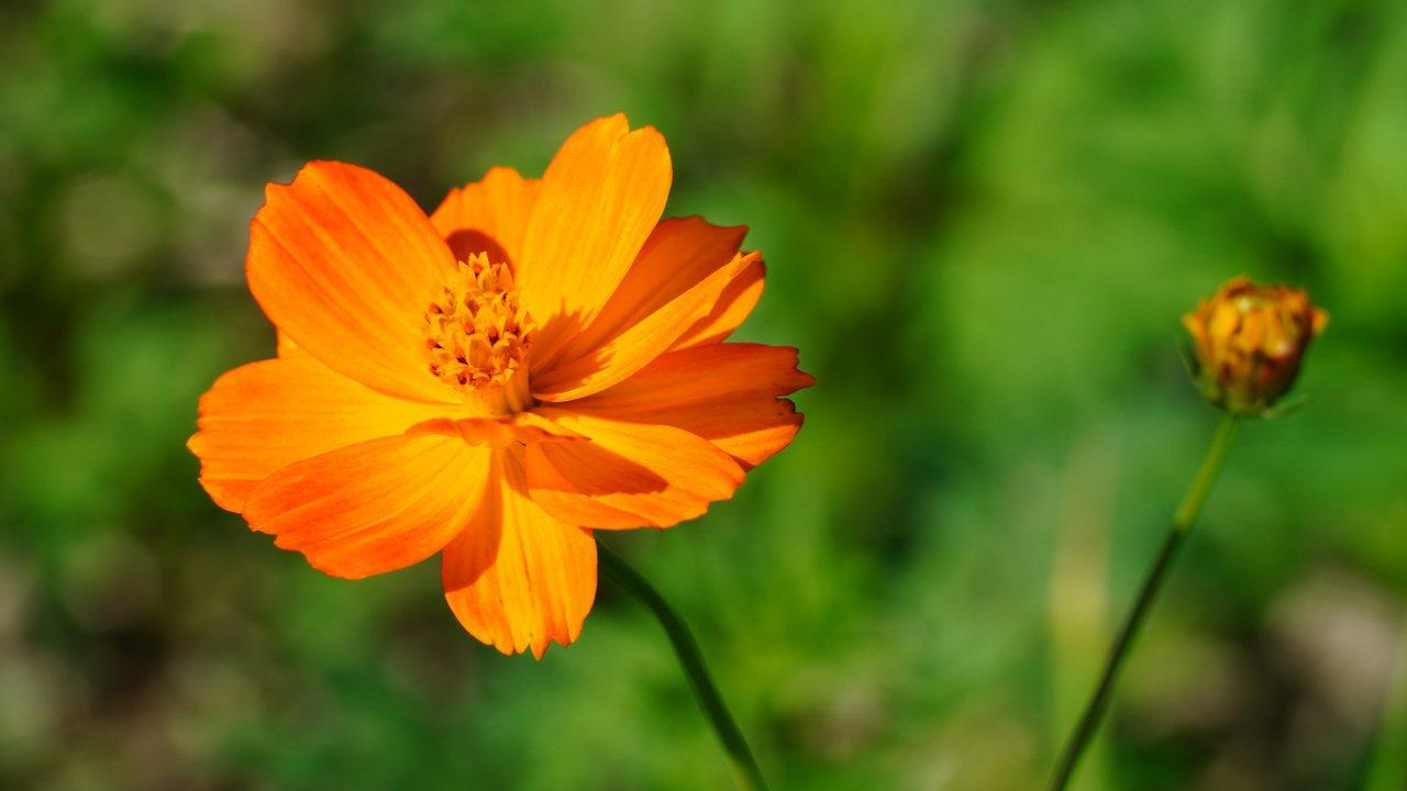 喜愛追花的朋友們,關渡秘境花海花卉種類多元。 圖/臺北市政府觀光傳播局
