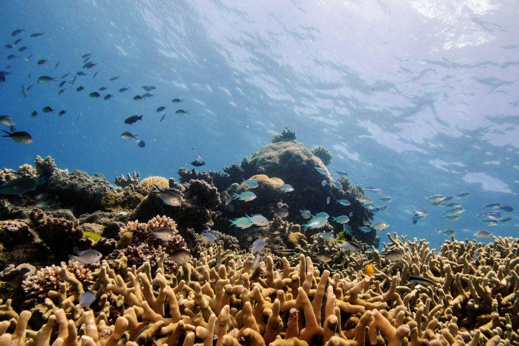 聯合國擬將澳洲大堡礁列入「瀕危名單」。 (路透)