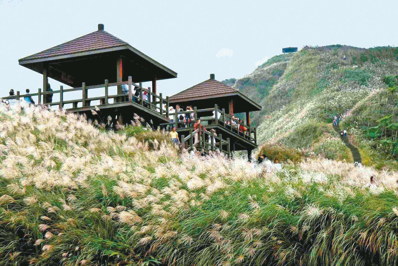 每年秋天「草嶺古道芒花季」吸引大批人潮登山。 圖/東北角暨宜蘭風管處 提供