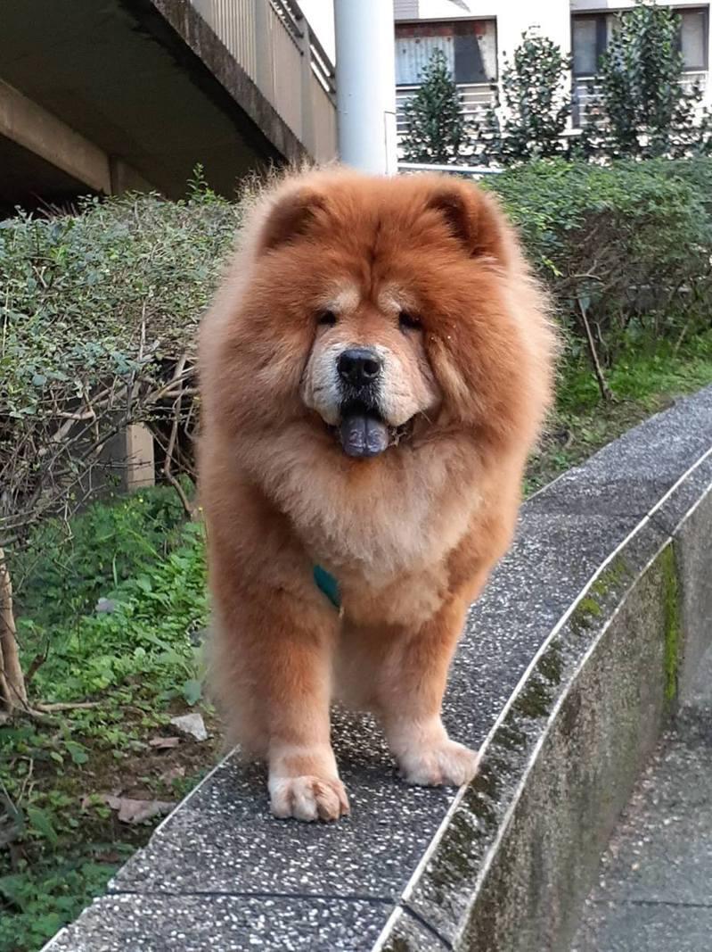 愛犬走失無消息,媽到土地公廟詢問,竟得到意外答案。受訪者提供