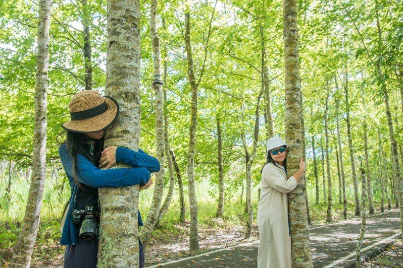 大農大富平地森林裡,可以感受與大自然最親密的接觸,不知不覺被大樹療癒。