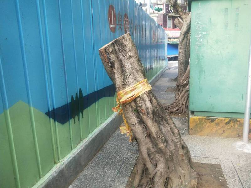 基隆信二路人行道老樹被砍剩根部,港公司工地修剪挨轟。記者游明煌/攝影