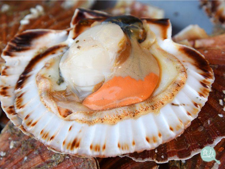 海扇貝其閉殼肌通常只有一個,其肌肉構造也較為肥厚強壯。 圖片提供/食力
