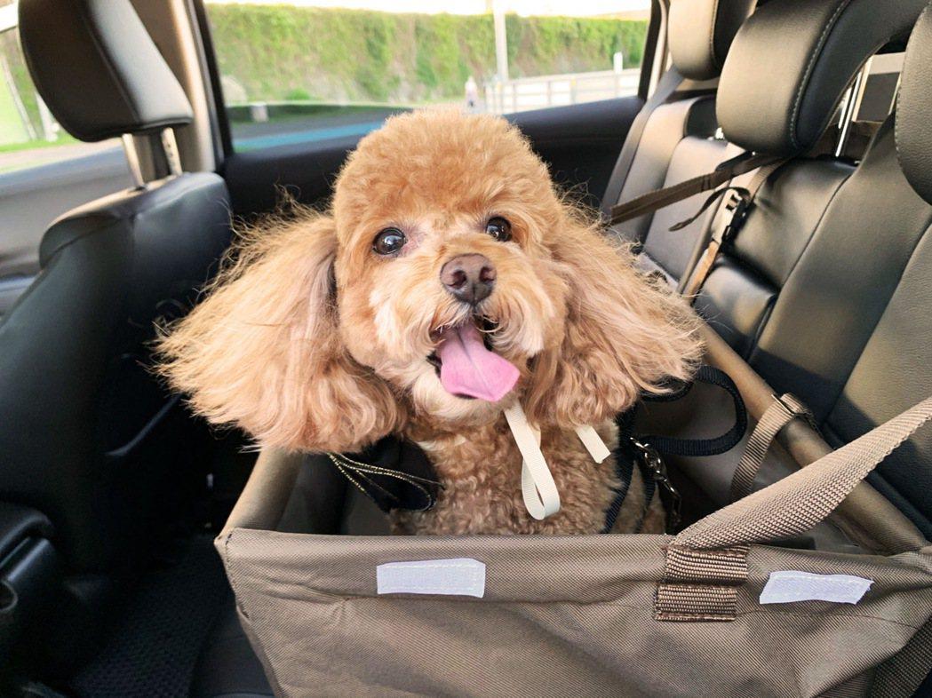 AVIS也提供寵物安全籃,毛小孩不需要受限於侷促的寵物籠中,飼主也不用擔心毛孩的...