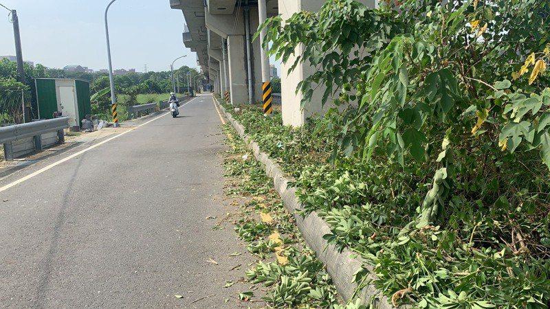 長榮大學女學生在台南台鐵橋下道路被擄殺,案發前不只路燈不亮,分隔島還雜草叢生。記者吳淑玲/攝影