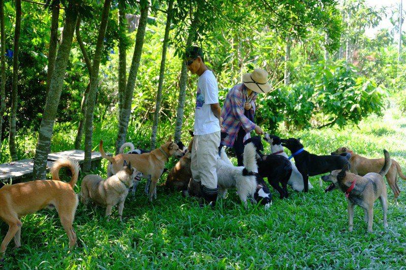 高雄市政府動保處與中華民國保護動物協會合作,推動「狗來富」計畫, 將選定適合的果園送浪浪去當狗保全。圖/中華民國保護動物協會提供