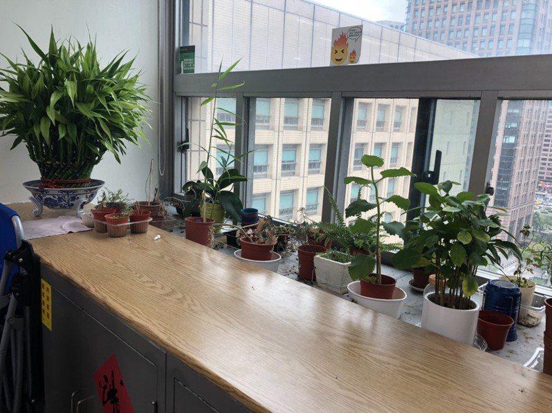在室內種植盆栽,能有效消除汙染功能。記者潘永鴻/攝影